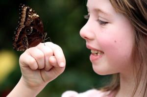 бабочка на руке