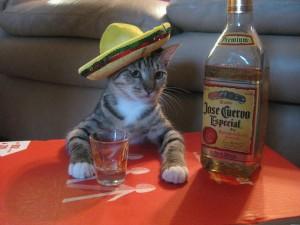 1382800067_cat-mexico